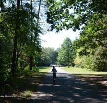 porytowe-wzgorze-lasy-janowskie-2016-08-26_11-37-35-dsc_0426