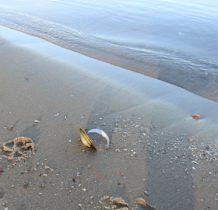 Miroszewo- skarby morza