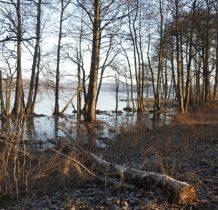 Myślibórz Wielki-nad jeziorem od strony puszczy
