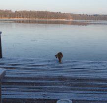 Myslibórz Wielki-co widac przez lód?