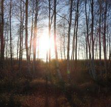 Nowe Warpno- słońce zaglada zza drzew