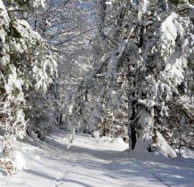 i sił ubywa w tym śniegu