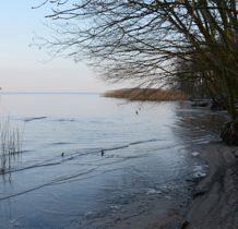 Trzebieradz- morze odsłania korzenie