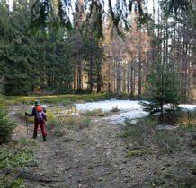 na polanie śnieg i krokusy