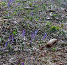 wiosna już blisko