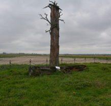 Dyniska-pod naporem wiatru sosna runęła w 2011roku