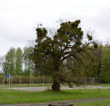 Turkowice-park