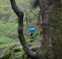 trasa prowadzi lasem,coraz wyżej