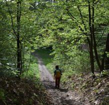 schodzimy na dół żółtym szlakiem