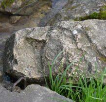 charakterystyczny dla skał jury