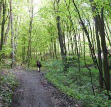 lasem do ulicy Widokowej