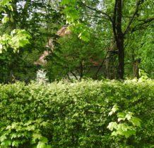 Karniowice-kaplica z XVIIw ukryta za zielenia parku dworskiego