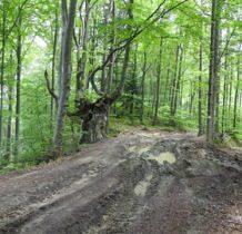 leśnymi,błotnymi drogami