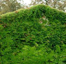 Biernacice- ściany dawnego dworu