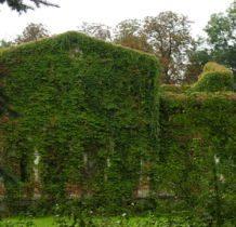 Biernacice- ruiny wygladaja bajkowo