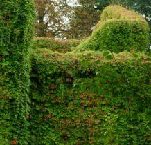 Biernacice- dwór w zieloności tonie
