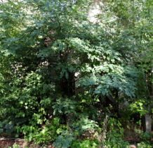 Góra Bałdrzychowska- dwór ukryty w drzewach