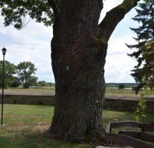 Pęczniew- pomnik przyrody przy kościele