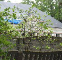 Prusinowice- dwór ukryty za wysokim betonowym ogrodzeniem