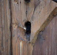 Siedlatków- w drzwiach wejściowych