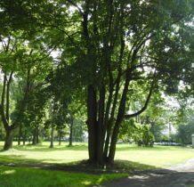 Wojsławice- w pałacowym parku