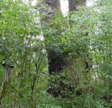 Wola Flaszczyna- uroczysko otoczone drzewami