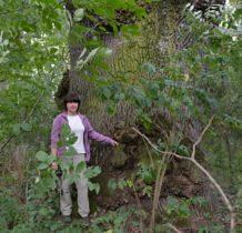 Wola Flaszczyna- drzewo