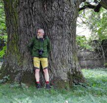 Zadzim- potężne drzewo