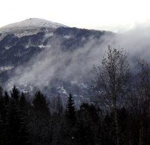 drzewa, mgła i połonina z Chatka Puchatka