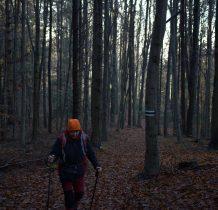 w lesie dużo liści, ślisko