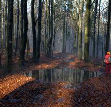 Drzewa przegladaja sie w wodzie