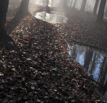 Lusterka Pani Jesieni