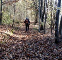 bukowe liście szeleszcza pod nogami