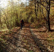 i znowu wchodzimy do lasu