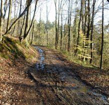 ostatnie metry leśnym szlakiem