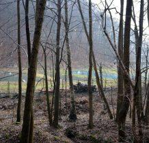 za drzewami widać stawy hodowlane
