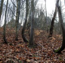 nawet drzewa przybieraja fantazyjne kształty