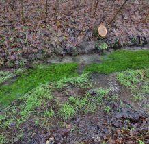 woda płynie po zielonym dywanie