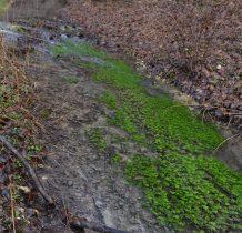 zadanie dla botanika, z czego ten zielony dywanik?