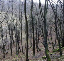 bezlistny las też ma swój urok