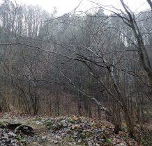 skały i drzewa