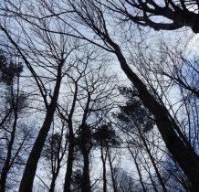 w katedrze drzew....