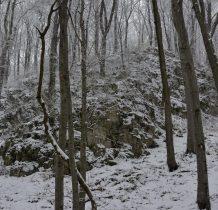 skały wapienne między drzewami