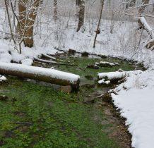 mimo zimy w wodzie zielono