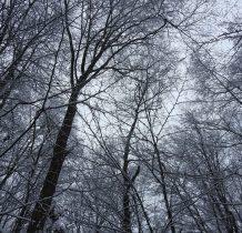 w koronach drzew
