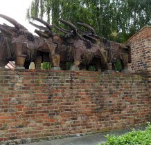 Wołów- w 2011 roku skradziono bykom rogi