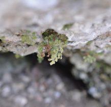 na zamkowych skałach