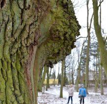 Siemkowo- w dawnym parku pałacowym
