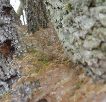 Zgorzały Most-cmentarne drzewa