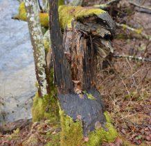 Zielona Łaka-królestwo bobra